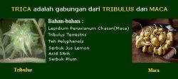 tribullus dan maca